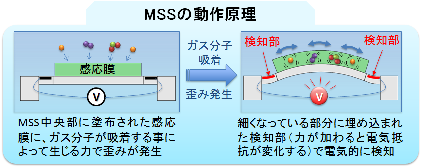 MSSの模式図。中央の感応膜に分子が吸着することによって生まれた表面応力を、周囲の4つのブリッジに埋め込まれた抵抗がすばやく検出する