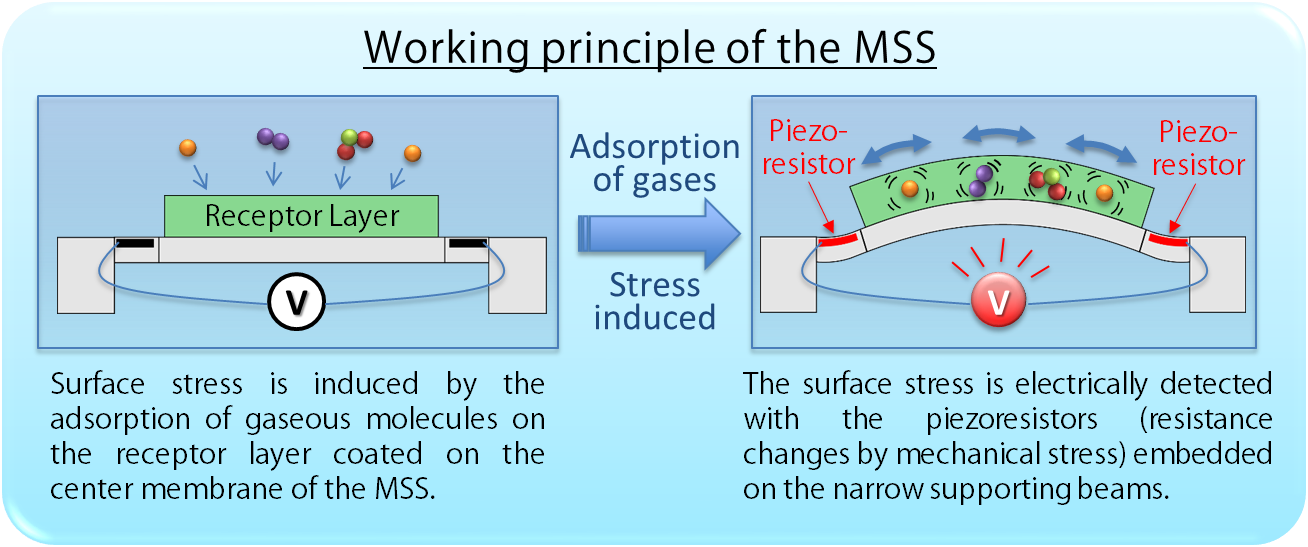 Schematics and working principle of the MSS