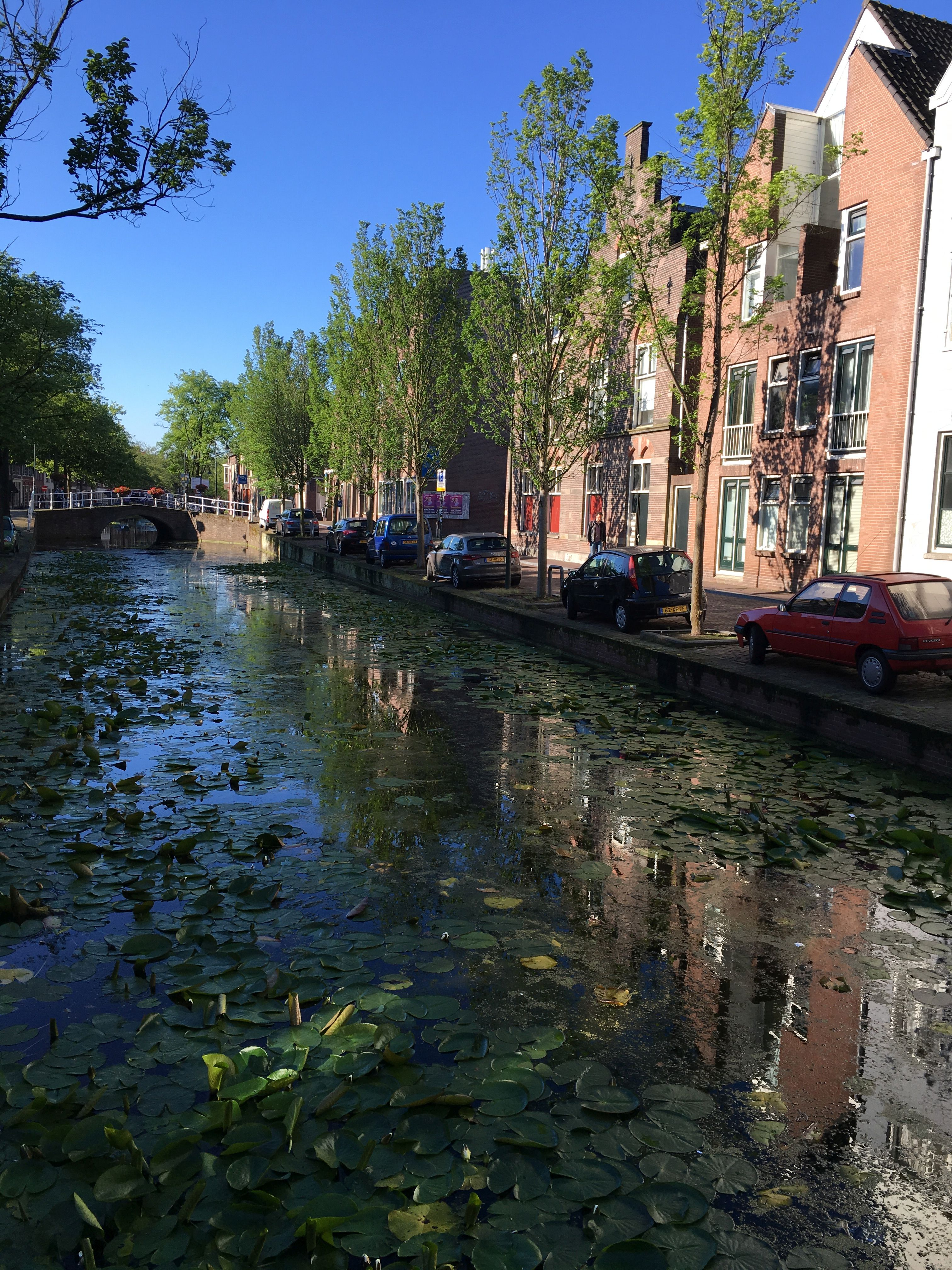 scene in Delft